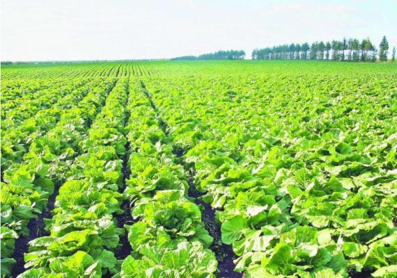 2018中国昆明绿色食品投资博览会下月举办
